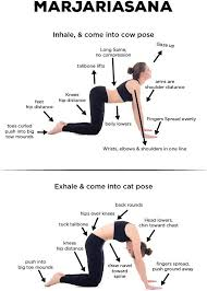 Marjariasana (Cow Cat Pose or Cat Pose)
